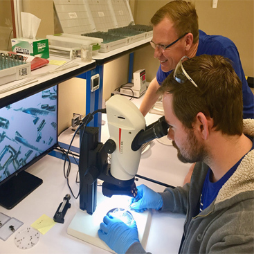 two men looking in a microscope